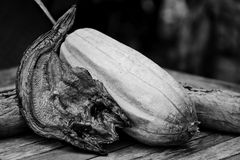 Pesce asciutto dello snackehead con luffa Fotografia Stock