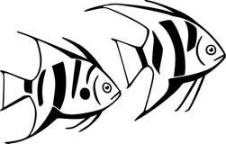 Pesce barrato due Immagine Stock