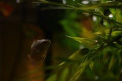 Pesce che raffredda appena Fotografie Stock Libere da Diritti