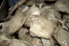 Pesce che vende nel mercato di Singapore Fotografie Stock Libere da Diritti