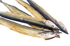Pesce cinque su un fondo bianco Fotografia Stock Libera da Diritti