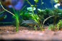 Pesce colorato Fotografia Stock Libera da Diritti
