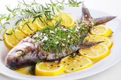 Pesce comune dell'orata Fotografie Stock