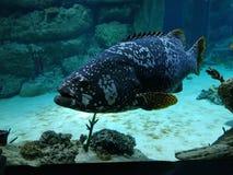 Pesce con colore insolito fotografia stock