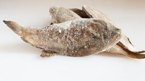 Pesce congelato immagini stock