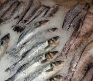 Pesce congelato sul ghiaccio fotografie stock libere da diritti