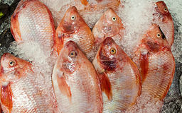 Pesce congelato in supermercato Fotografia Stock Libera da Diritti