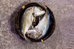 Pesce cotto a vapore in un canestro Fotografia Stock Libera da Diritti