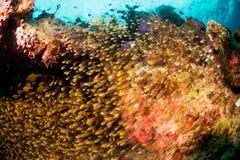 Pesce cristallo Immagini Stock Libere da Diritti