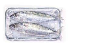 Pesce crudo appena preparato della sardina su ghiaccio con un fondo bianco fotografie stock libere da diritti