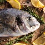 Pesce crudo di dorado con i rosmarini ed il sale marino Fotografie Stock Libere da Diritti