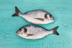 Pesce crudo di dorado due Vista superiore, spazio della copia Immagine Stock Libera da Diritti