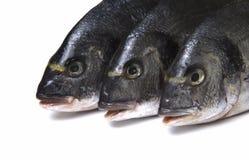 Pesce crudo di dorado su fondo bianco Immagine Stock