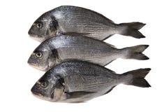 Pesce crudo di dorado su fondo bianco Immagini Stock