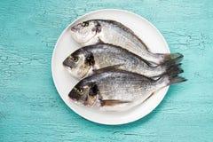Pesce crudo di dorado sul piatto bianco su fondo blu Vista superiore Fotografia Stock Libera da Diritti