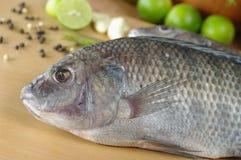 Pesce crudo di tilapia Fotografia Stock