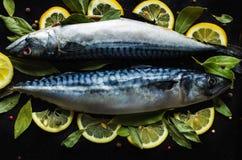 Pesce crudo fresco dello sgombro con le foglie della baia e del limone Fotografia Stock