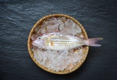 Pesce crudo fresco gastronomico dell'oceano della stecca a ganascia dei frutti di mare sul canestro del ghiaccio sulla pietra immagine stock