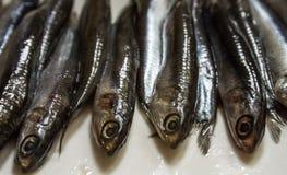 Pesce crudo nel mercato fotografia stock libera da diritti