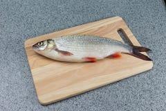 Pesce crudo, non cucinato Pesce bianco su un tagliere Fotografia Stock Libera da Diritti