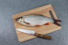 Pesce crudo, non cucinato Pesce bianco su un tagliere e su un coltello Immagine Stock
