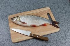Pesce crudo, non cucinato Pesce bianco su un tagliere e su un coltello Immagini Stock