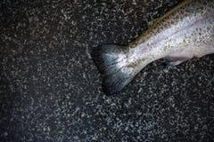 Pesce crudo su fondo scuro Fotografia Stock