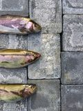 Pesce crudo su un pavimento Fotografie Stock Libere da Diritti