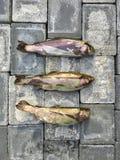 Pesce crudo su un pavimento Immagine Stock Libera da Diritti