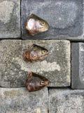 Pesce crudo su un pavimento Immagini Stock