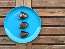 Pesce crudo su un piatto Fotografia Stock Libera da Diritti