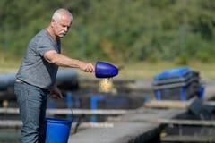 Pesce d'alimentazione dell'agricoltore senior del pesce Fotografia Stock Libera da Diritti