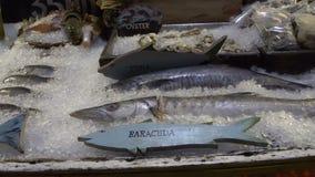 Pesce del barracuda visualizzato su ghiaccio nella sera archivi video