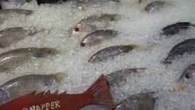 Pesce del dentice visualizzato su ghiaccio nella sera stock footage