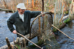 Pesce del fermo dell'agricoltore in fiume facendo uso delle trappole di pesca della rete del cerchio Immagini Stock Libere da Diritti