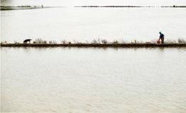 Pesce del fermo dell'uomo sul campo sommerso Fotografie Stock Libere da Diritti