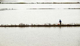 Pesce del fermo dell'uomo sul campo sommerso Immagini Stock Libere da Diritti