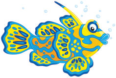 Pesce del mandarino Immagine Stock
