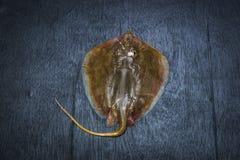 Pesce del raggio di Sting fotografia stock libera da diritti