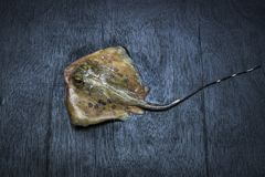 Pesce del raggio di Sting fotografie stock