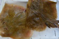 Pesce del rombo Fotografie Stock
