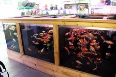 Pesce dell'acqua fredda da vendere Fotografie Stock Libere da Diritti