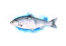 Pesce dell'acquerello con l'occhio giallo Immagine Stock Libera da Diritti