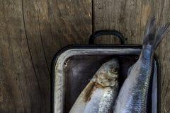 Pesce dell'aringa, primo piano Cena di Prepering alimento Cuore-sano Immagini Stock Libere da Diritti