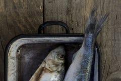 Pesce dell'aringa, primo piano Pasto di Prepering Idee di ricetta del pesce Immagine Stock