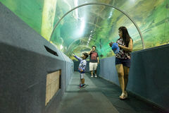 Pesce dell'orologio della gente in tunnel acquatico fotografia stock libera da diritti