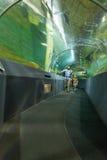Pesce dell'orologio della gente in tunnel acquatico immagine stock