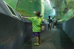 Pesce dell'orologio della gente in tunnel acquatico fotografia stock