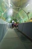 Pesce dell'orologio della gente in tunnel acquatico immagini stock