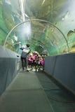 Pesce dell'orologio della gente in tunnel acquatico fotografie stock